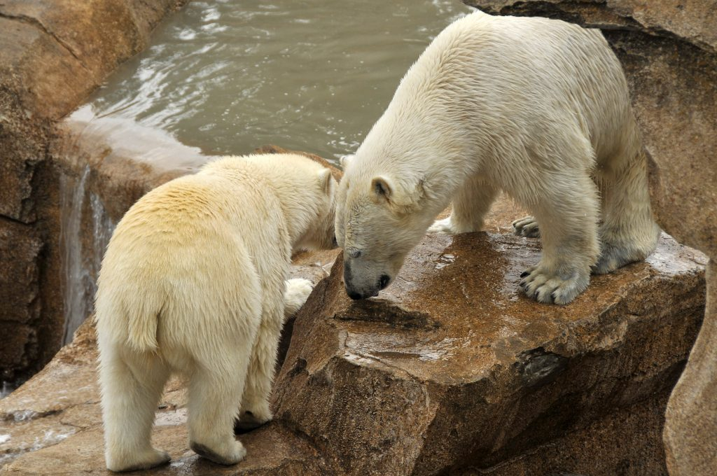 marineland_bear
