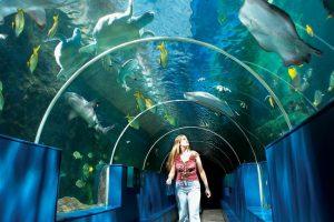 the-bournemouth-aquarium
