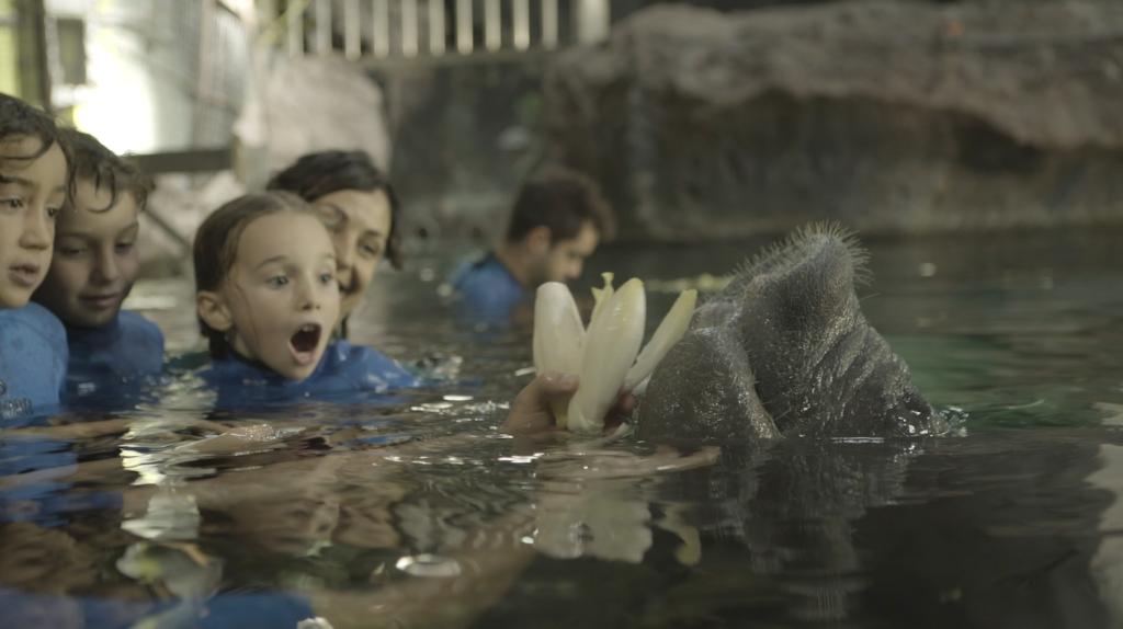 En Faunia, niños en el agua dan de comer a un manatí.