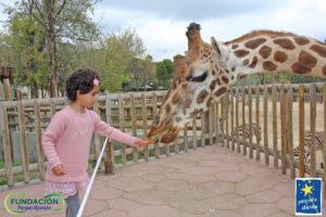niña dando de comer a una jirafa