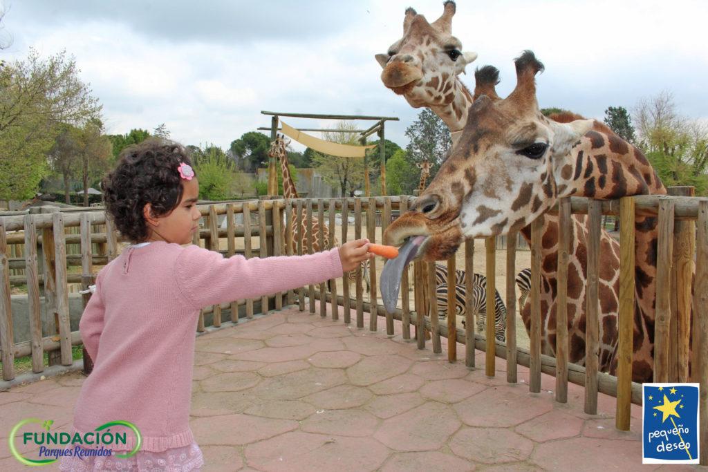 Valentina dando de comer a dos jirafas